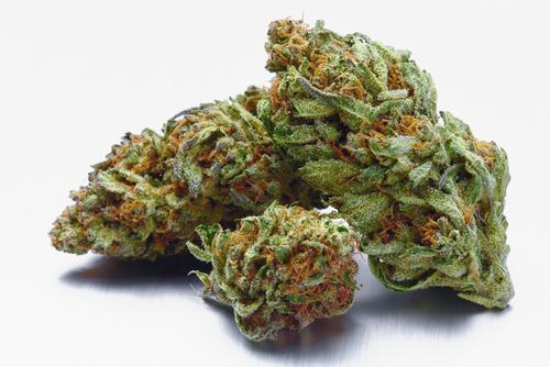 Marijuana Attorney in Harrison NJ